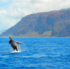Napali Coast and Whale