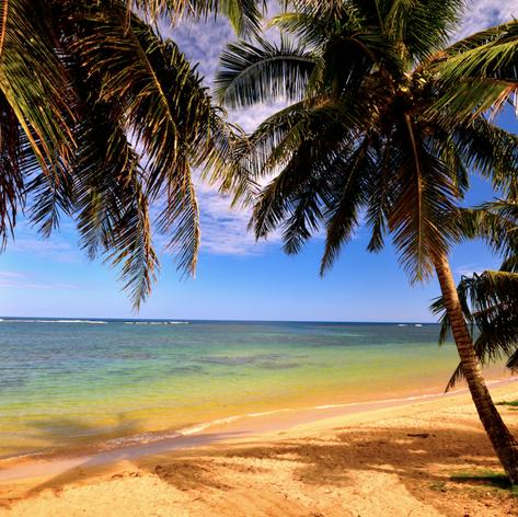 Ocean & Palm Trees