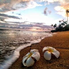 Sand Flowers Sunsetting
