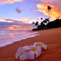 Ocean beach and flowers = paradise