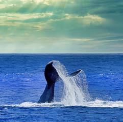 Sunshine breaking through & whale tale