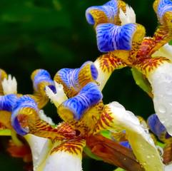 Blue & White Flower