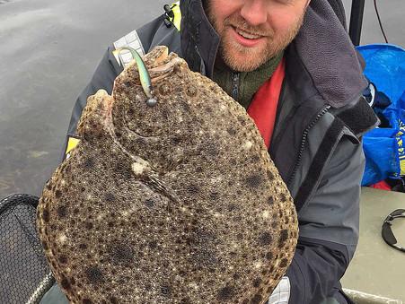 Höstkikfisket efter piggvar igång