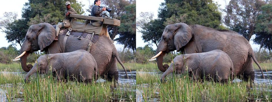 ElephantBeforeAfter.jpg