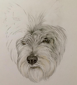 pet portrait drawing of dog drawing of c