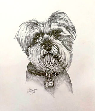 Pet portraits Drawing of Bertie_edited_e