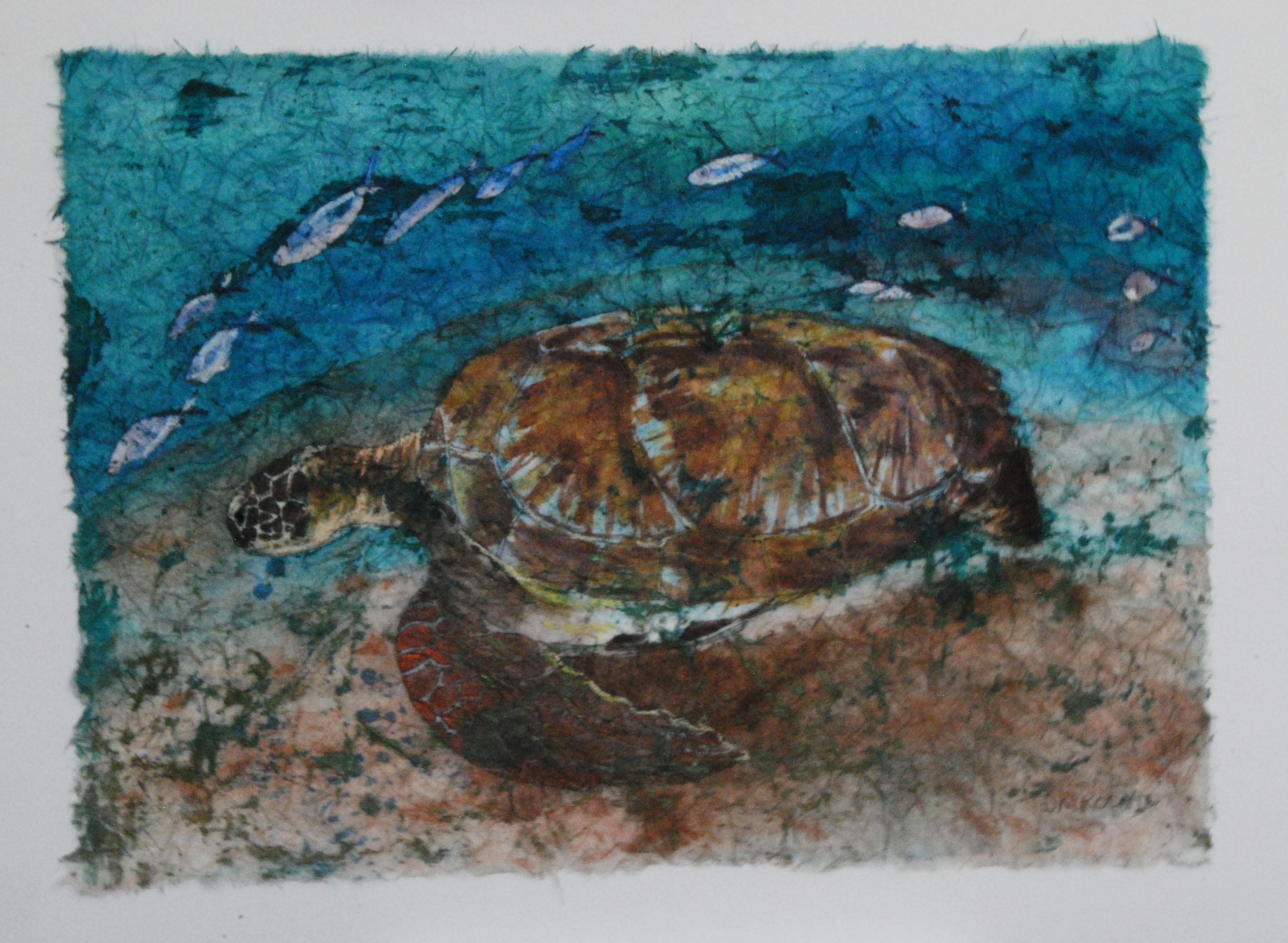 Loggerhead and Fish 17x13
