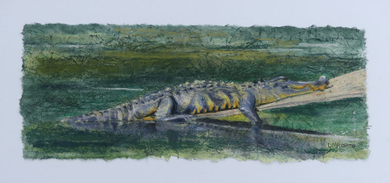 Lonely Gator 8 x 17 image 14 x 23 fr
