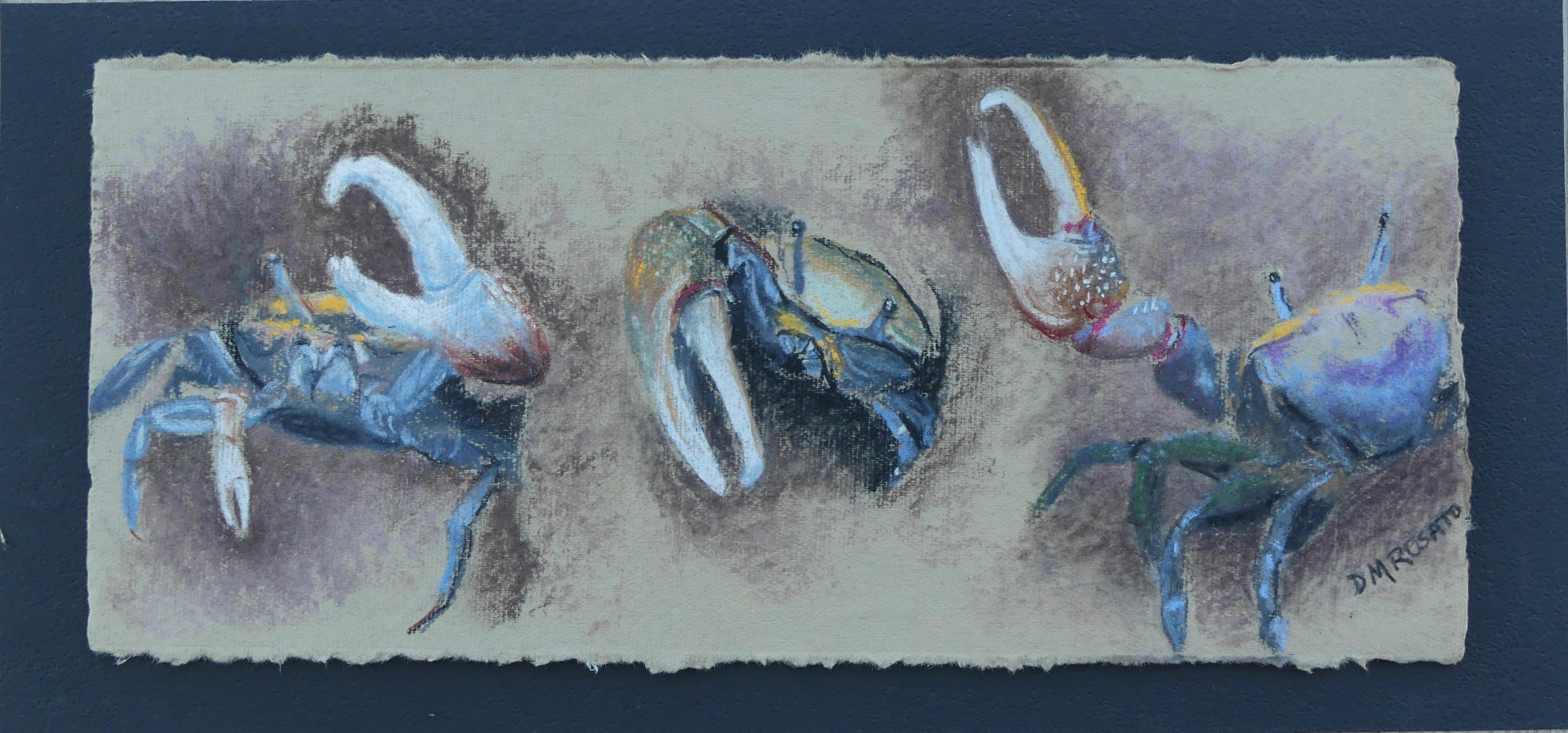 Fiddler Crab Study
