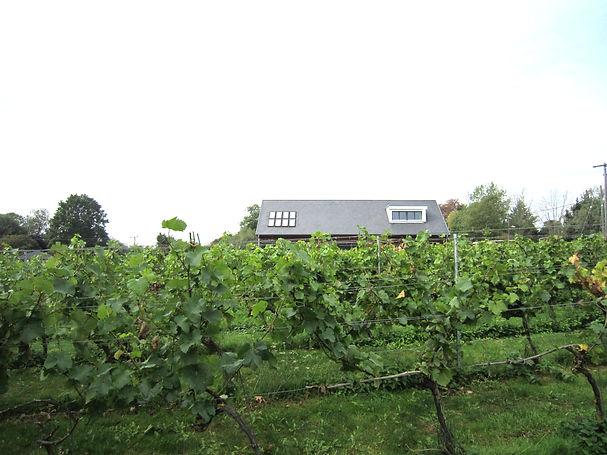 West Street Vineyard