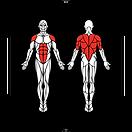 6D-Muscles_Hex-SupermanOnKnee_L.png