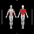 6D-Muscles_Hex-LittleMermaid_L.png
