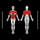 6D-Muscles_Hex-PushUpOnKnees_L.png