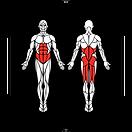 6D-Muscles_Hex-SingleLegCurl_L.png