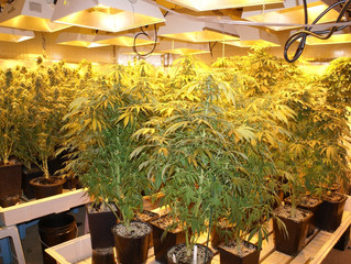 """""""My Tenant turned my Million Dollar Property into a Grow House!"""" - Landlord's Perspect"""
