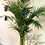 Thumbnail: Palma Areca Maceta Barro