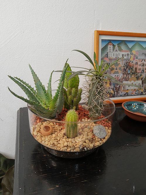 Terrarios Mini Jardin Mixto:
