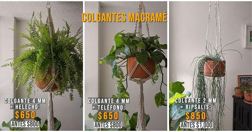 COLGANTES MACRAMÉ (2).jpg