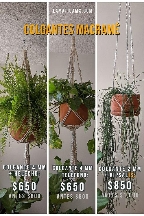 Promoción: Colgante + Planta
