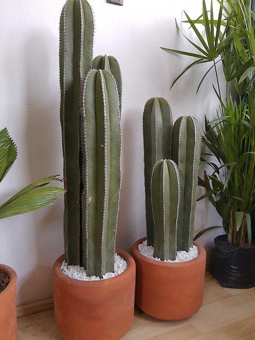 Cactus Órgano 3 en 1