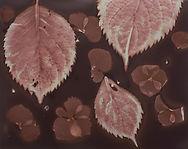 0349_leaves-petals (002).jpg