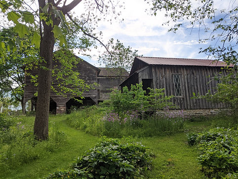 Barn and shed.jpg