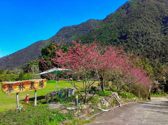 9453|南投|漫步山谷,放鬆心靈的旅行。翠林農場、蝴蝶步道