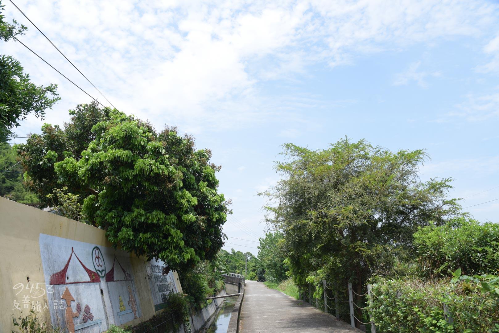兩旁的桐花樹