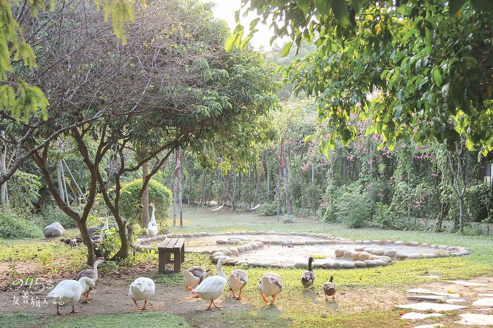 花樹銀行任雞鴨漫步的花園