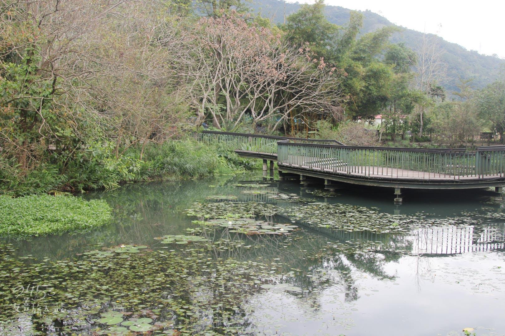 欣綠農園的池塘