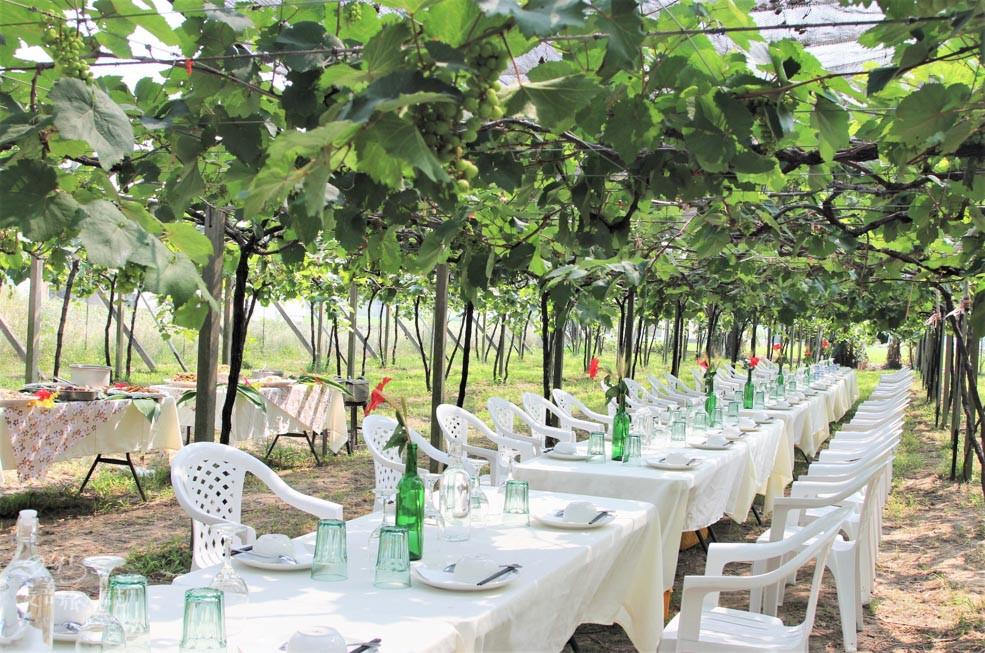 台中葡萄果樹下享受絕美餐酒會