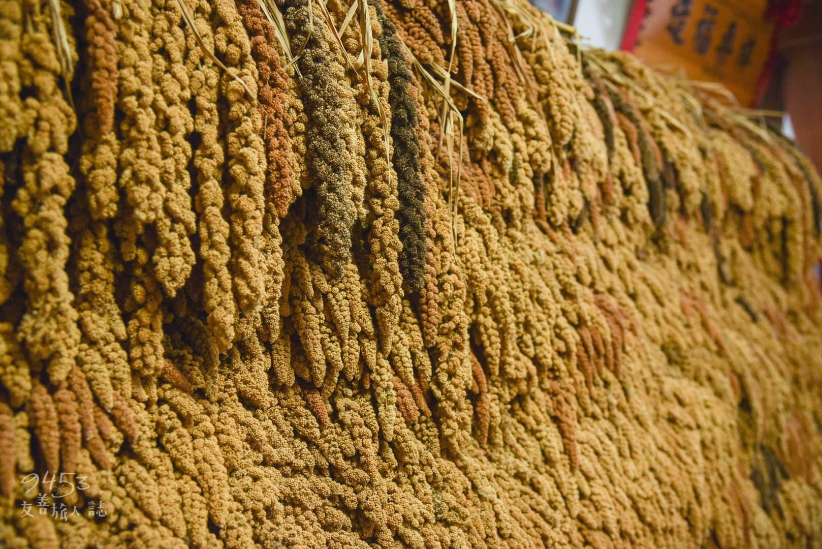 隨處可見的金黃色小米