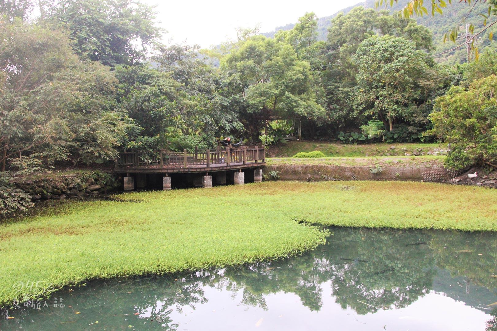 欣綠農園中的池塘
