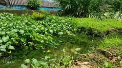 白魚生態池
