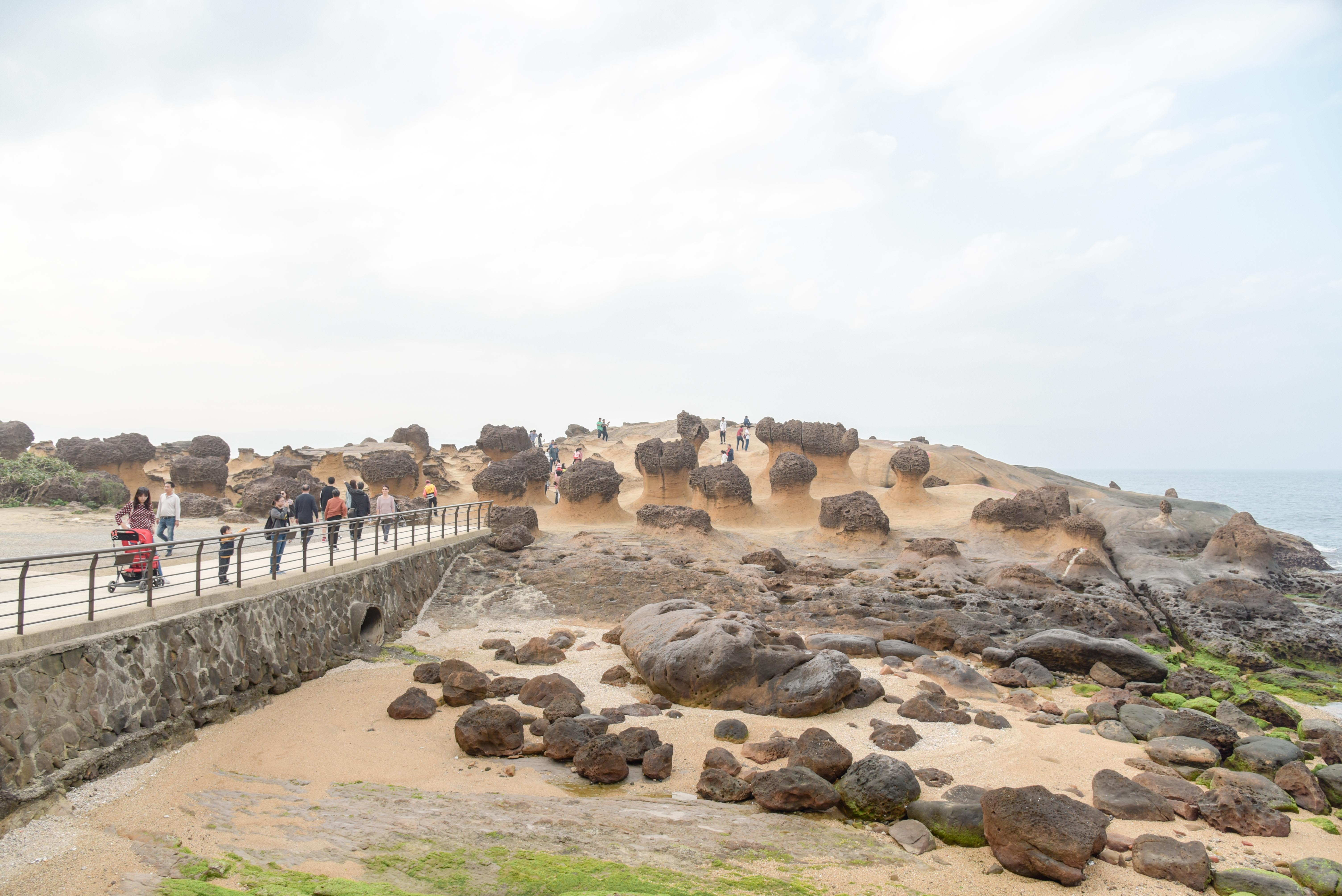 野柳地質公園蕈狀岩、薑石及燭台石的主要集中區