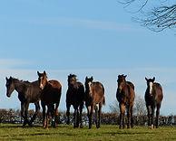 Foals - pension élevage