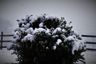 Haras sous la neige 2018