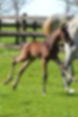 Elevage pur sang & AQPS Bourgogne - Pension chevaux élevage