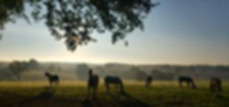 Haras jeunes chevaux de couses