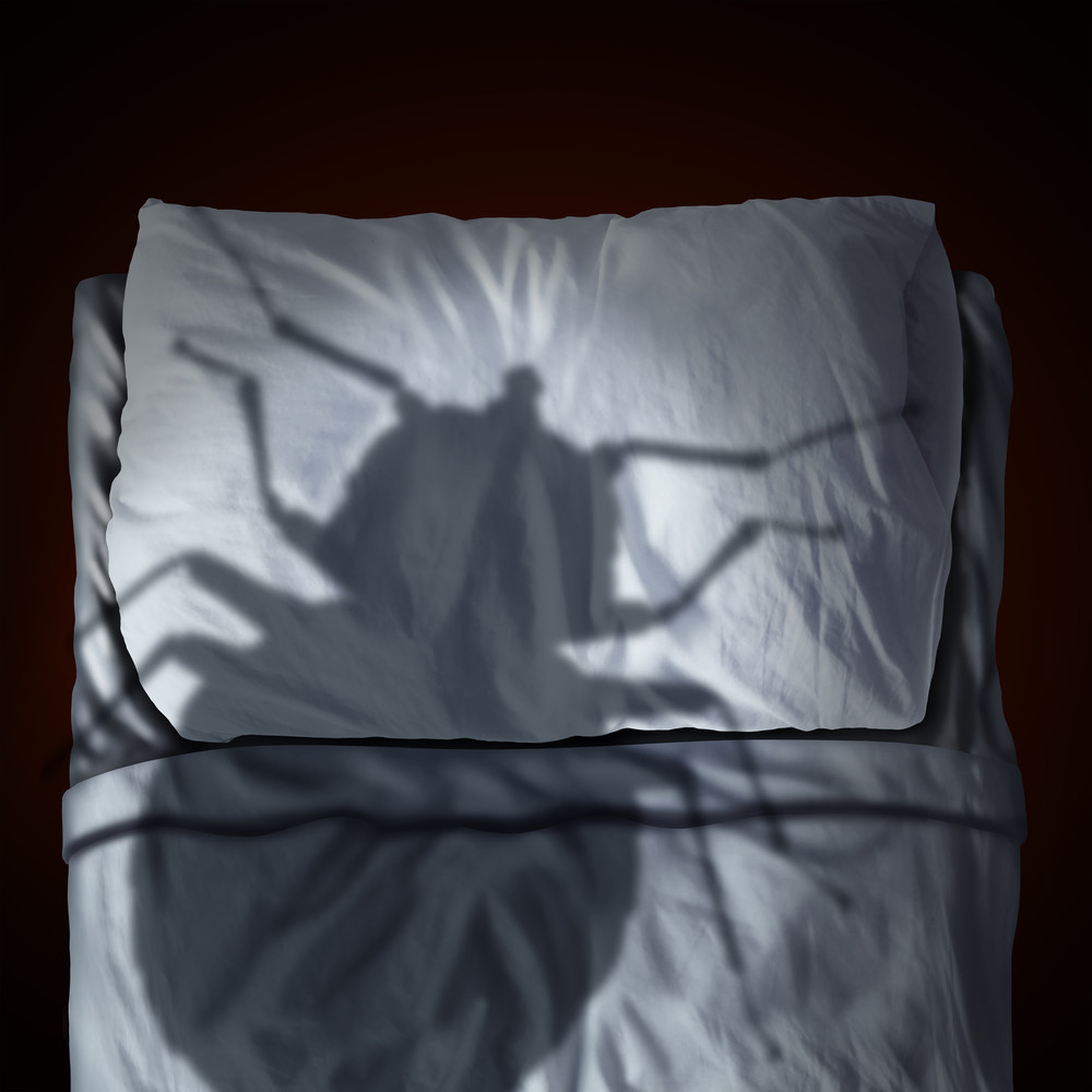 get rid of bed bugs with Sterifab