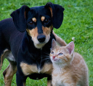 cute dog and cat pets with fleas to get rid of
