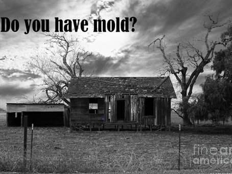 How to Get Rid of Mold (And Why You Can't Ignore It)
