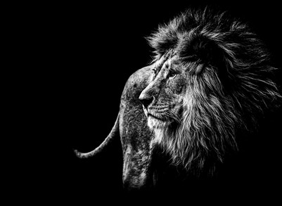 How To Recognize a Lion