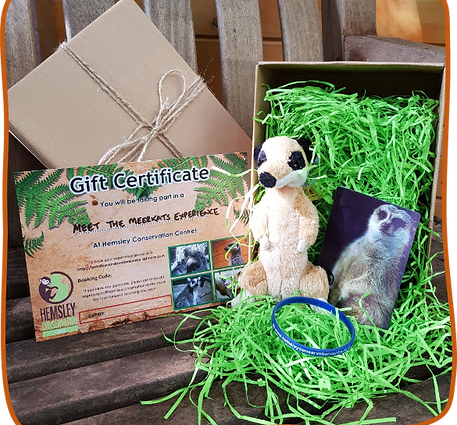 Meet the Meerkats with Gift Pack