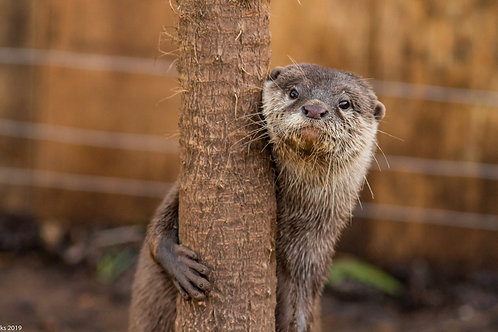Otter Care Package
