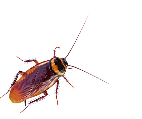 Name A Cockroach