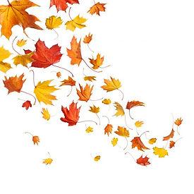 leaves falling 2.jpg
