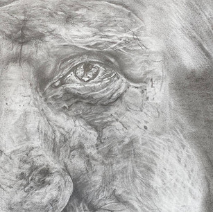 Eyes that tell a thousand stories, 2015