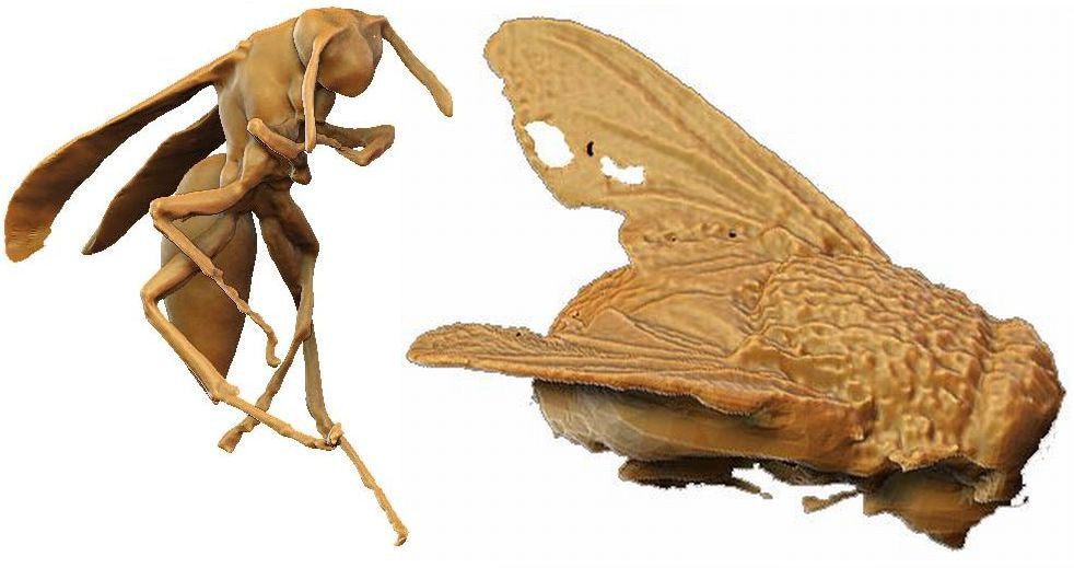01-Real-size_Wasp_and_Fly_by_Bongobat_and_Hal_f11612dc-a8c9-4148-974e-dec62b7175