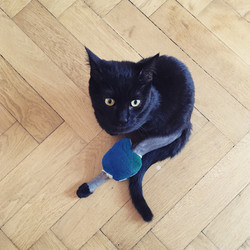 Office cat OBAMA with broken leg